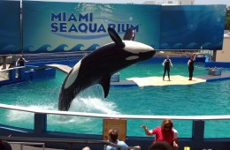 Miami Seaquarium