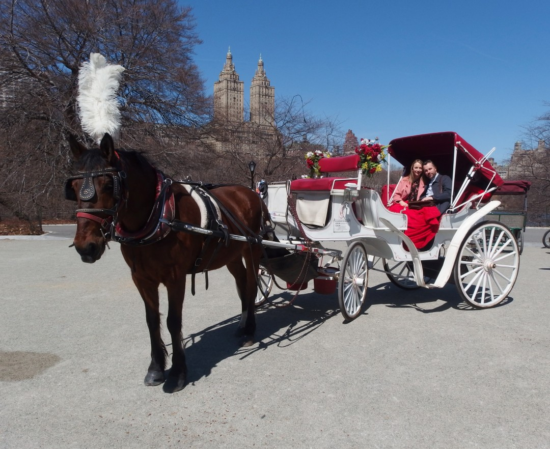 Horse & Carriage Ride Central Park
