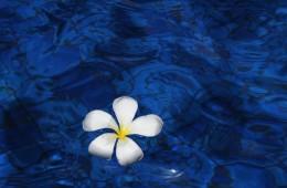 Qi Wellness Treatment