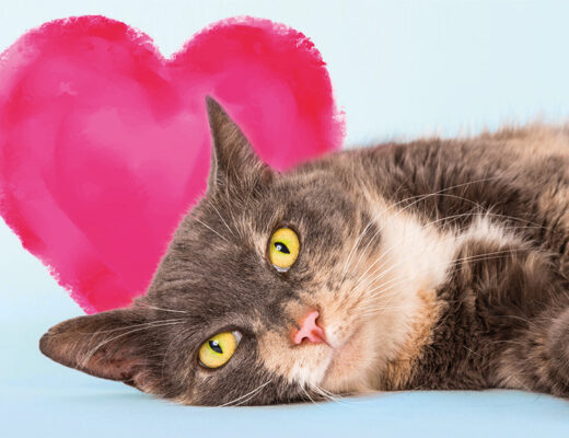 Valentine's Battersea Cat Home